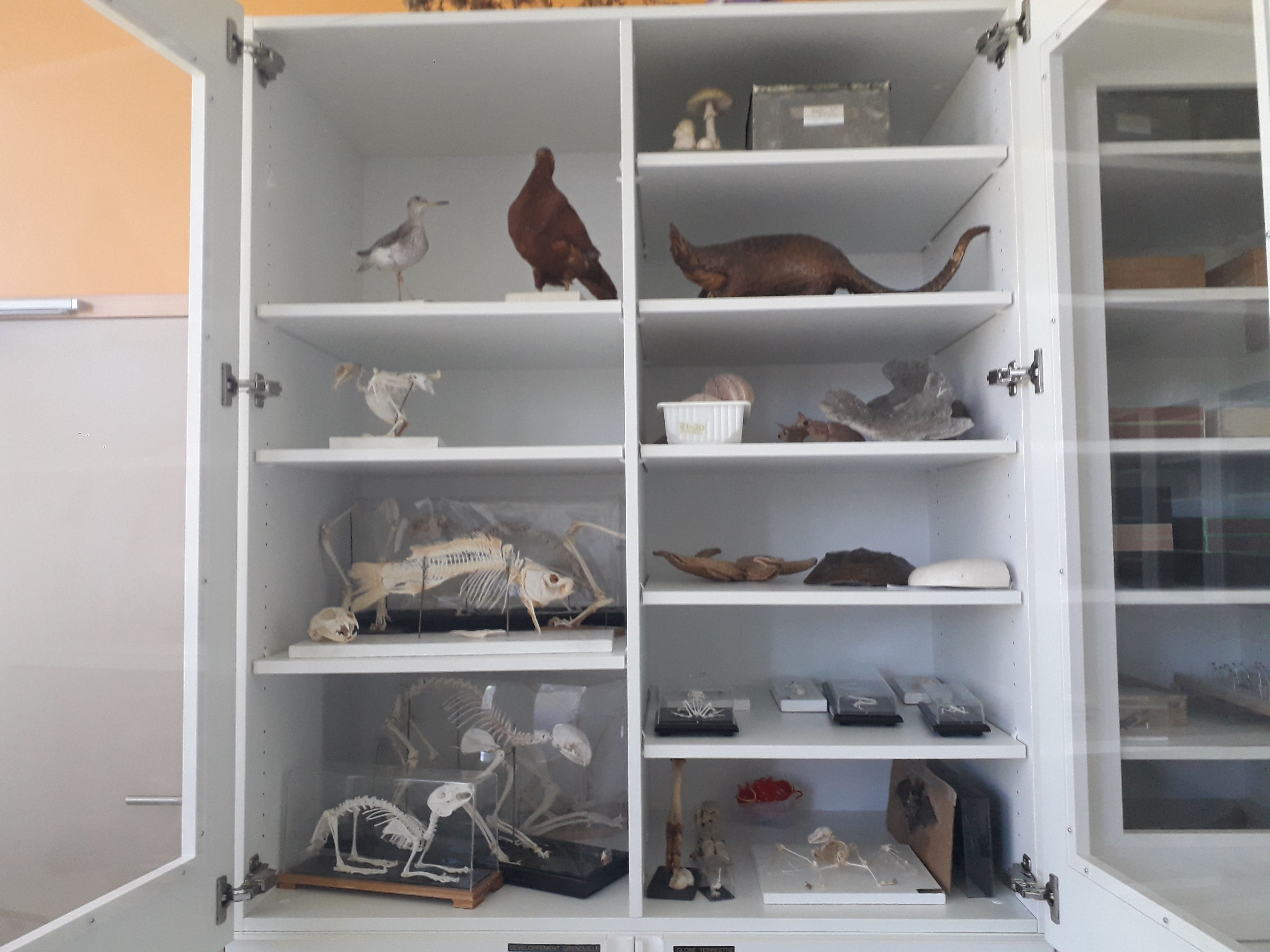 Collection de zoologie
